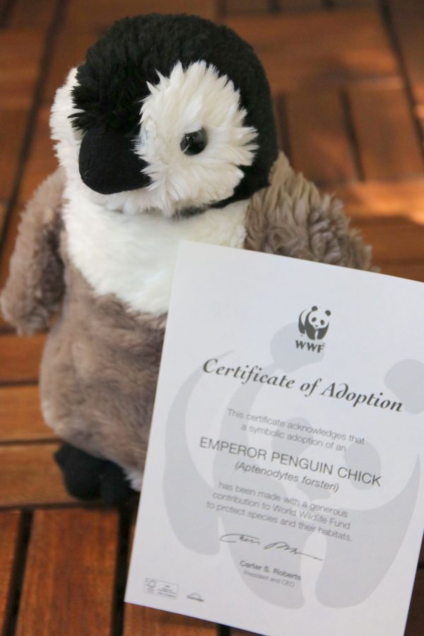 Patty the penguin kniting pattern donation to WWF
